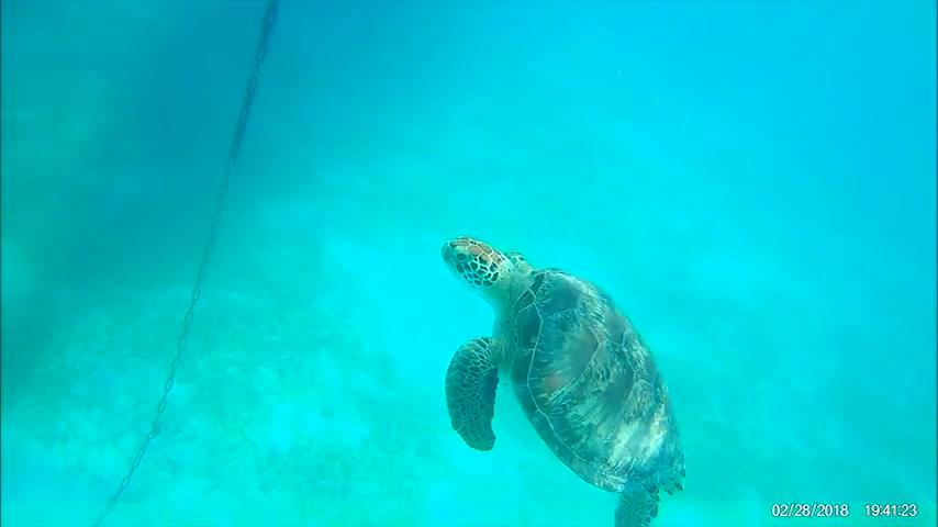 Dansar med sköldpaddor