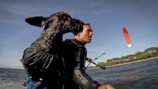 Sveriges första kitesurfande hund in action