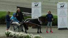 Ponny landsleir - løp 11 lørdag